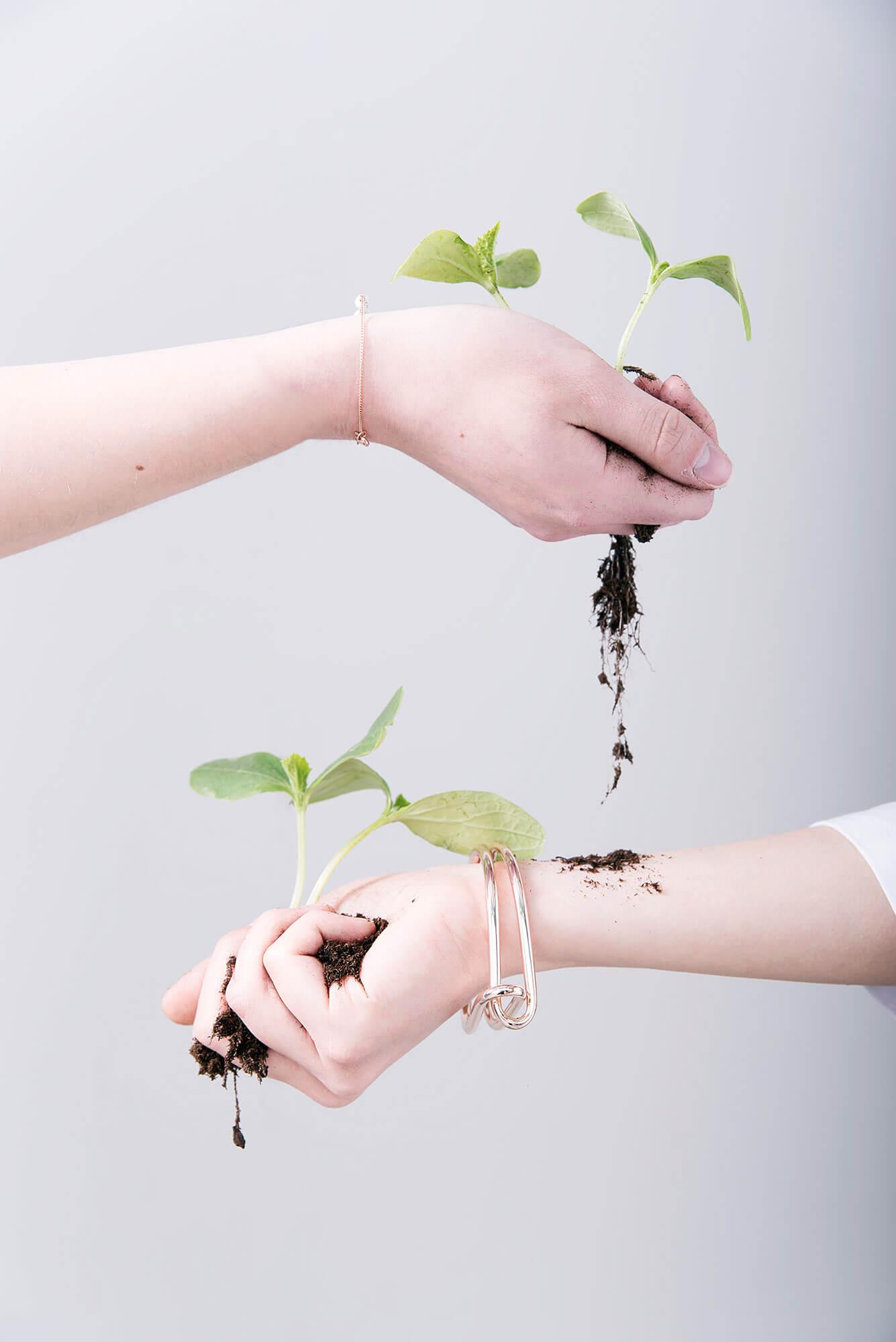 Down to earth handen met plant