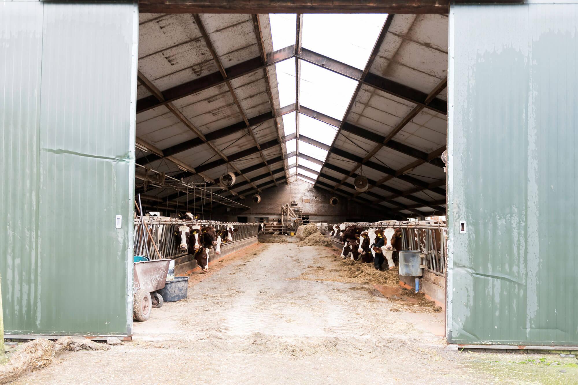 Koeienstal van Boer Henrie