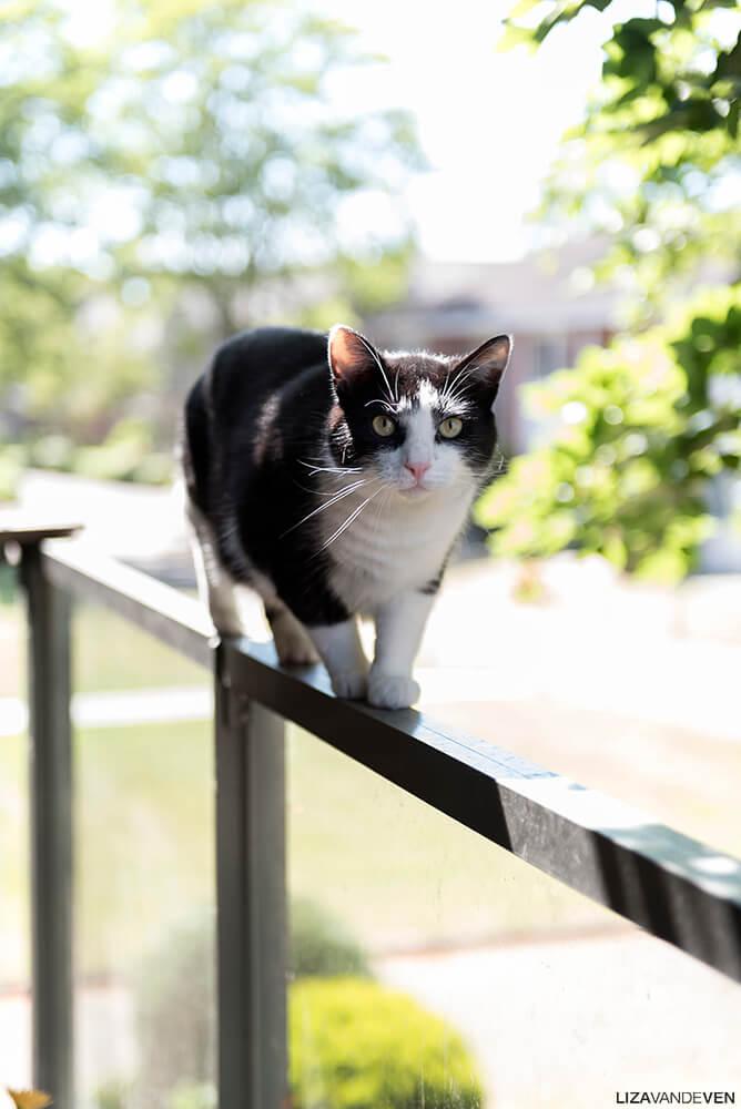 Kat Vlek op de ralling van het balkon