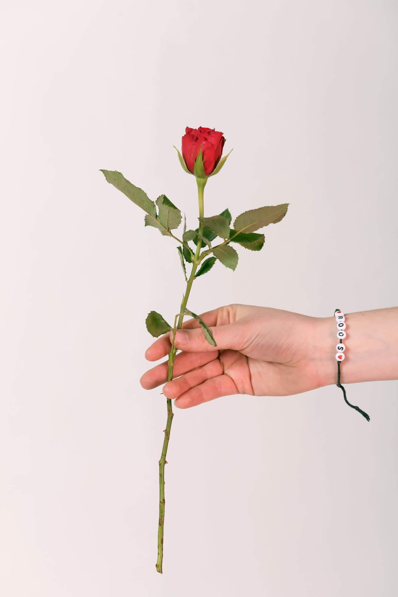 Rosan haar hand en een rode roos