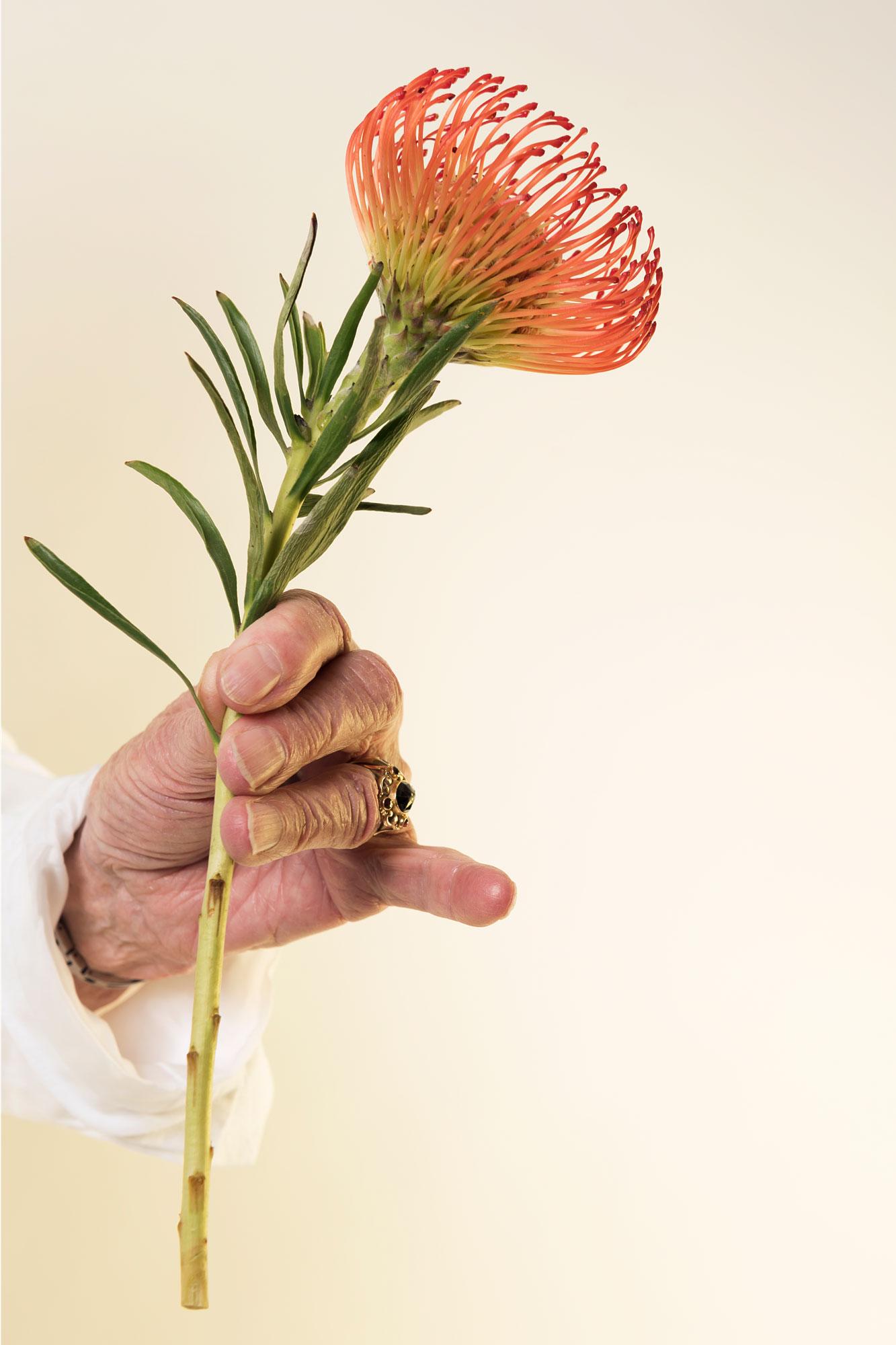 afrikaanse bloem