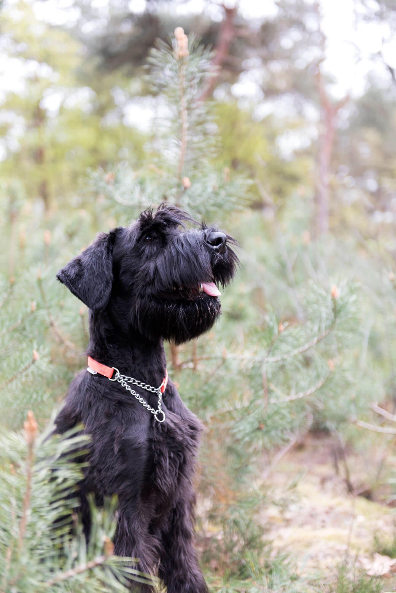 Honden foto Reina