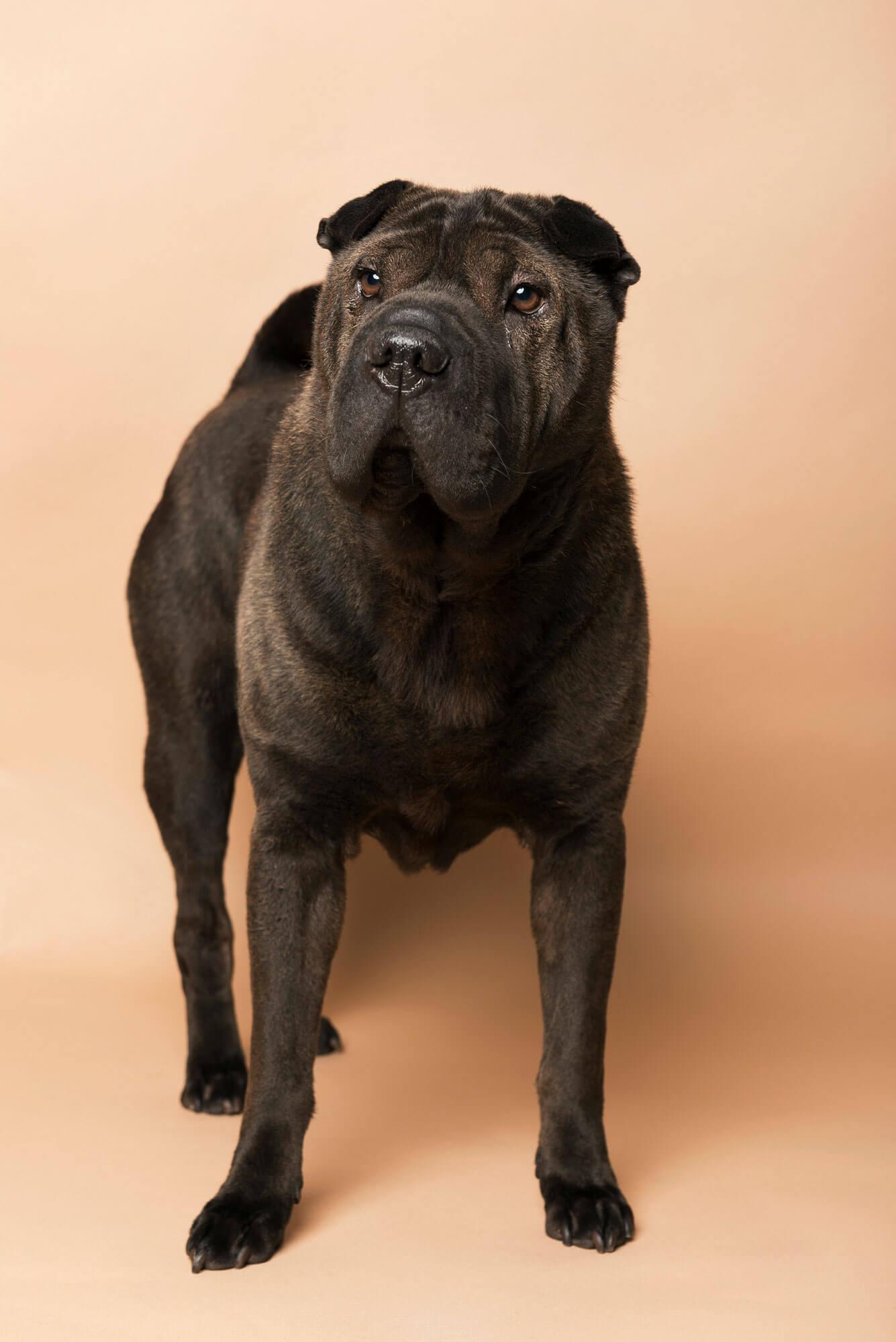 Honden foto studio