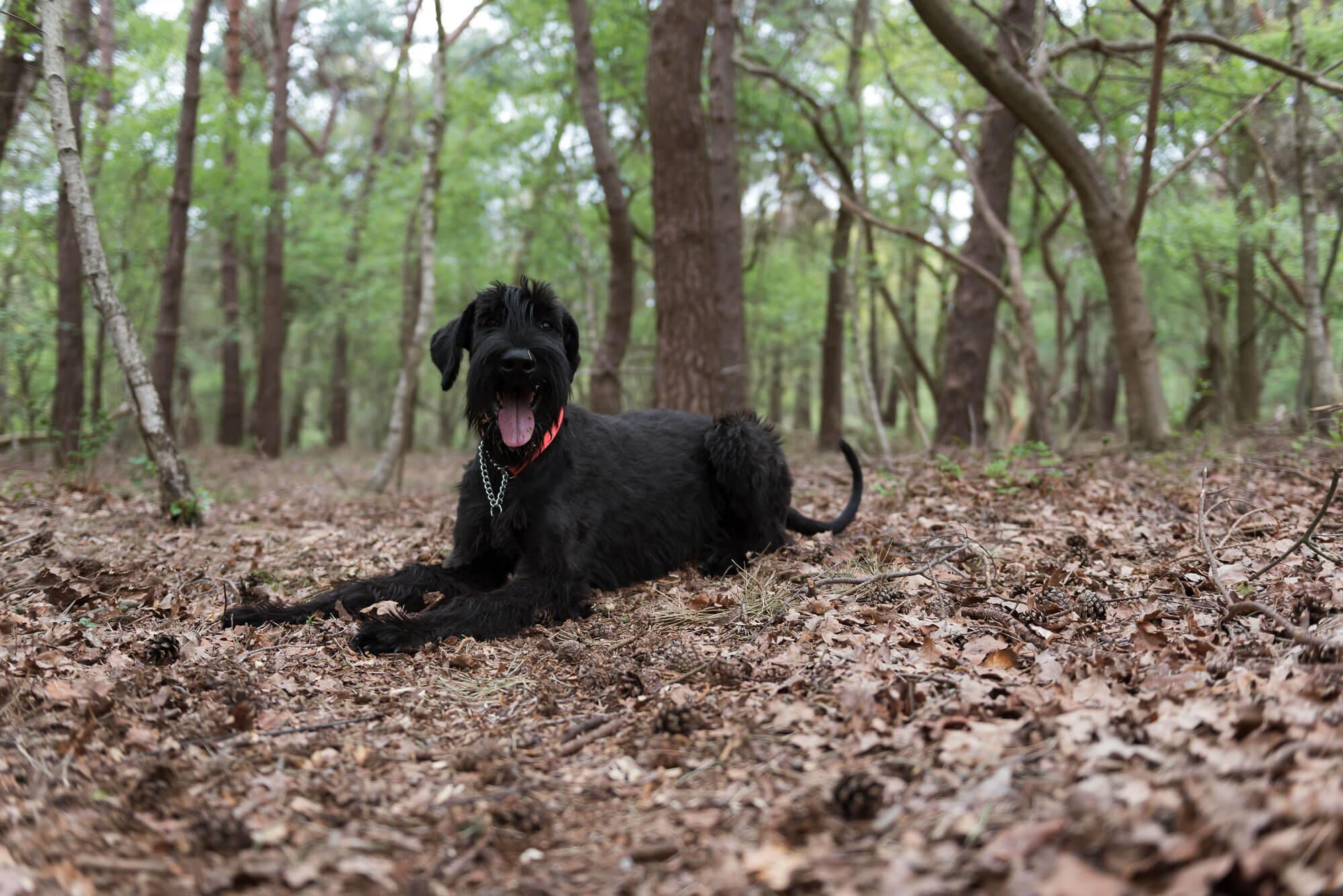 Honden foto in de natuur