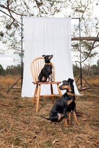 A Dogs Tale Binchy en Imogen