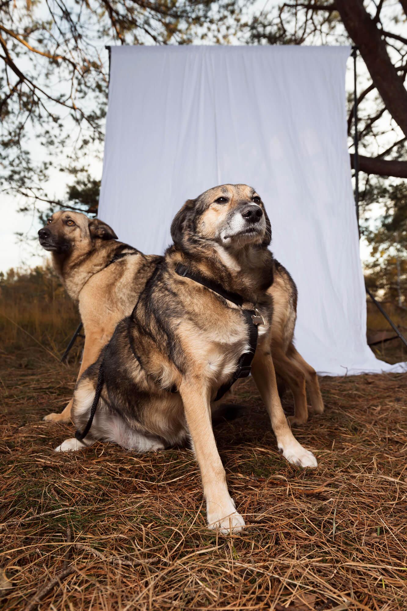 A Dogs Tale Donny en Kira