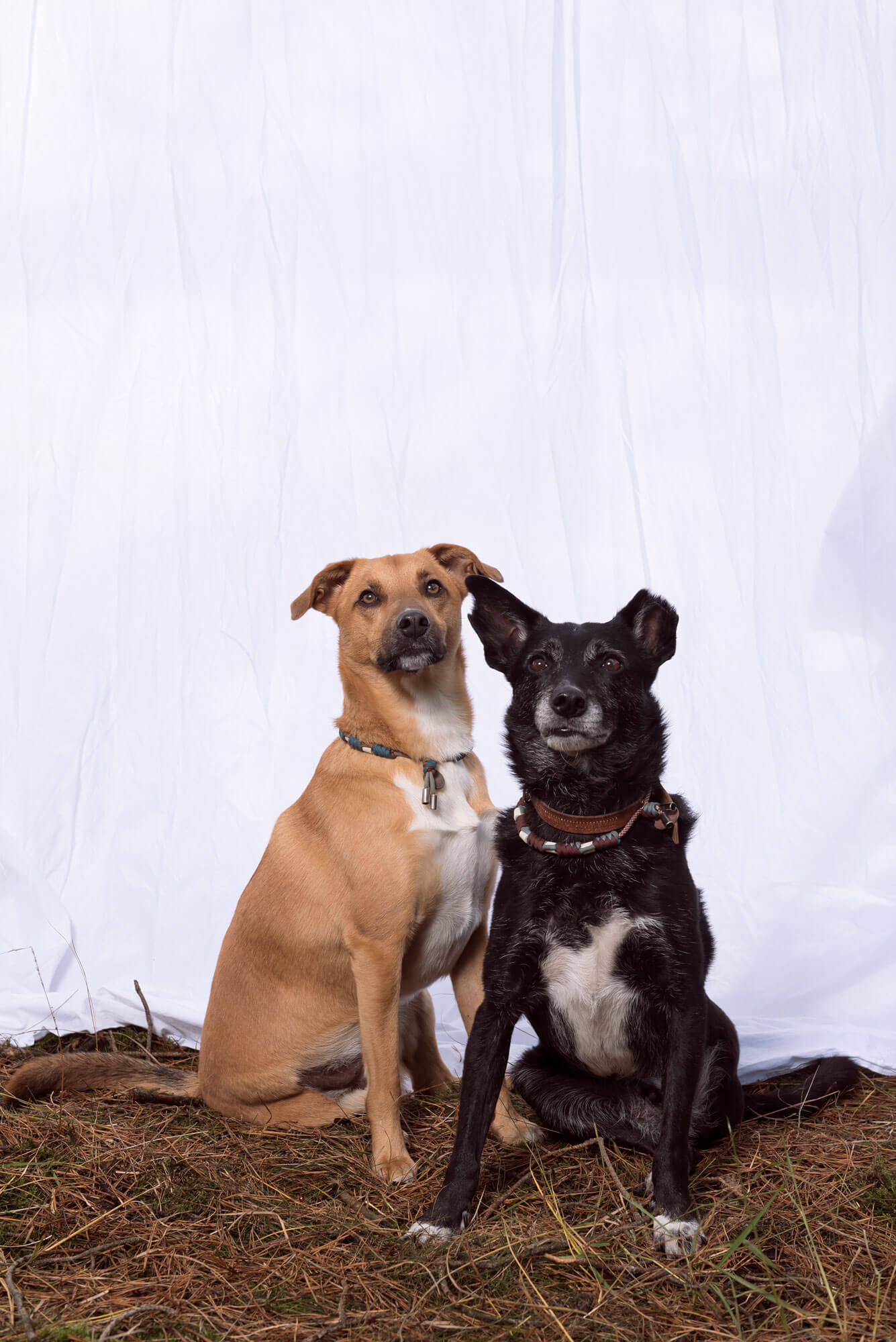 A Dogs Tale Dex en Jak