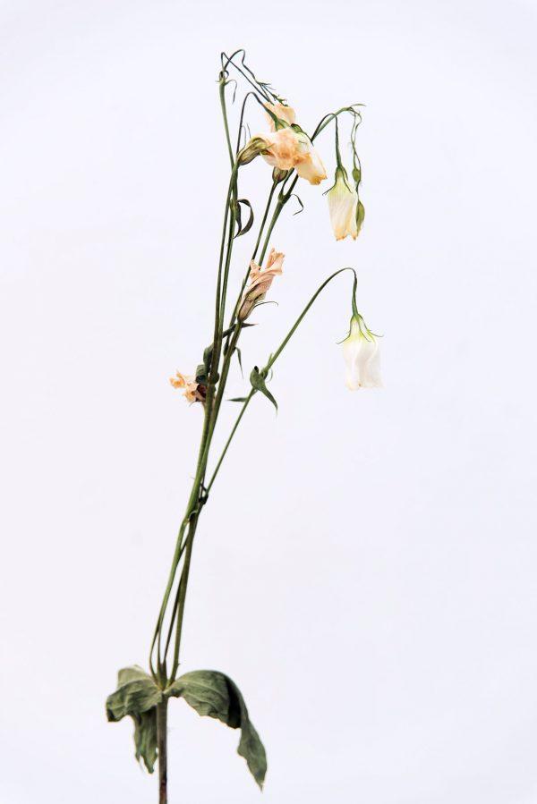 life bloemen